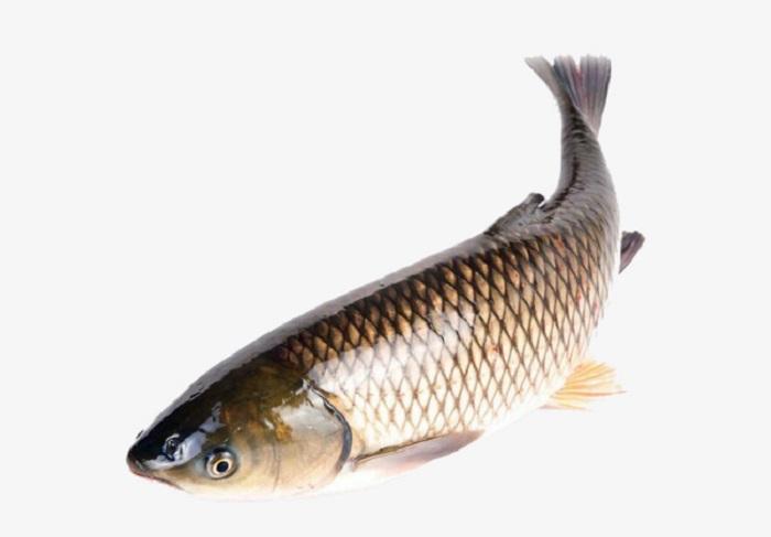 Mơ thấy cá trắm là điềm gì?