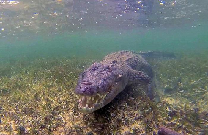 Nằm mơ thấy cá sấu đánh số mấy may mắn nhất